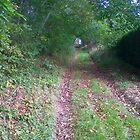 Forest Walk in Autumn by suewen