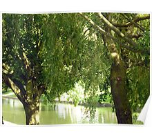 Willow trees Poster