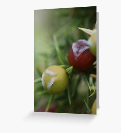 Prickly Juniper Cones Greeting Card
