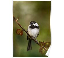Autumn Chickadee Painting Poster