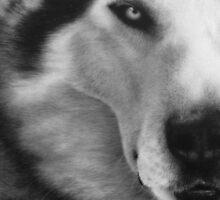 Husky Portrait by XeNzO