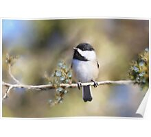 Cedar Rose Chickadee Art Poster