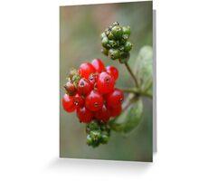 Honeysuckle Berries Greeting Card