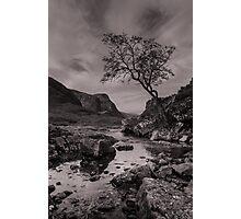 The Lone Tree of Glencoe Photographic Print
