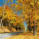 Sunny Country Road by Lois  Bryan