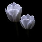 White x 2 by Jan Pudney