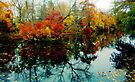 Fall reflections by Holly Martinson