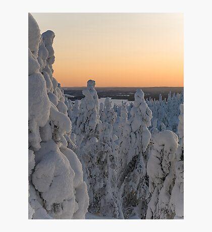 Snowscape Photographic Print