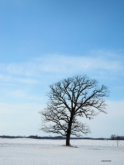 One Bare Tree in Winter by Barberelli