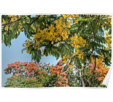 Yellow and Red Poinciana Trees in Nassau, The Bahamas Poster
