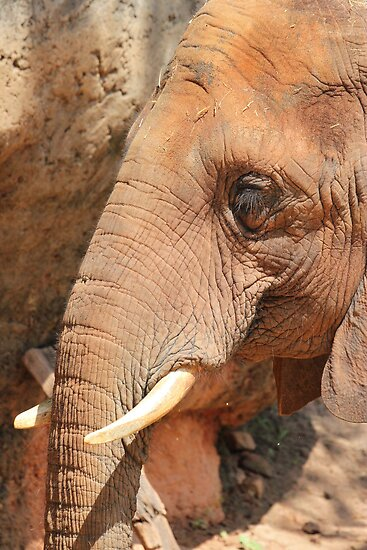 Elephant by quirinusriddle