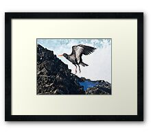 Oyster Catcher catching the waves. Framed Print