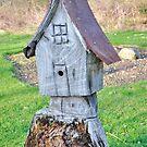 Stump house by Penny Rinker
