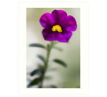 The Light Inside -- Calibrachoa Blossom Art Print
