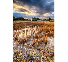 Straws & Sunset Photographic Print