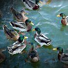 Painted Ducks by elainemarie999