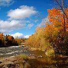 Autumn Sunshine by Joanne  Bradley