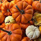 Pumpkins & Gourds. by Lee d'Entremont