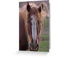Wind through my mane Greeting Card