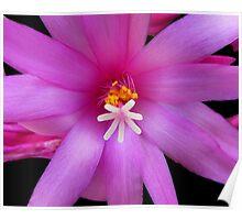 Macro Image - Pink Zigo Cactus Poster