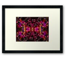 Cotton Candide Framed Print