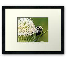 Buzzin Too Framed Print