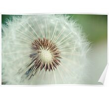Red Seeded Dandelion Poster
