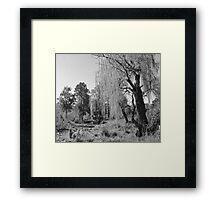 Black & White Willow Framed Print