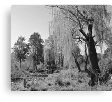 Black & White Willow Canvas Print