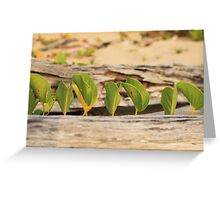 MCC Serenity at the Beach Greeting Card