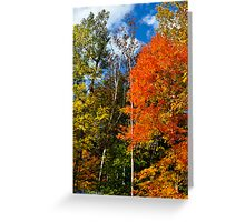 Magnificent Colors Greeting Card