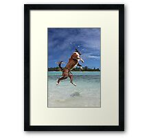 MCC It's a dog's life! Framed Print