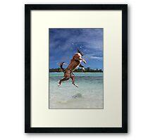 MCC It's a dog's life! Framed Print