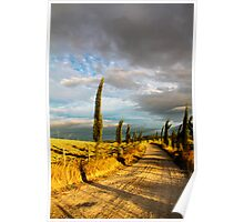 Country road, Tuscany Poster