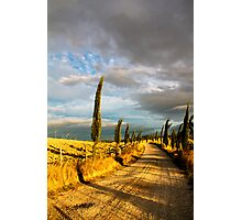 Country road, Tuscany Photographic Print