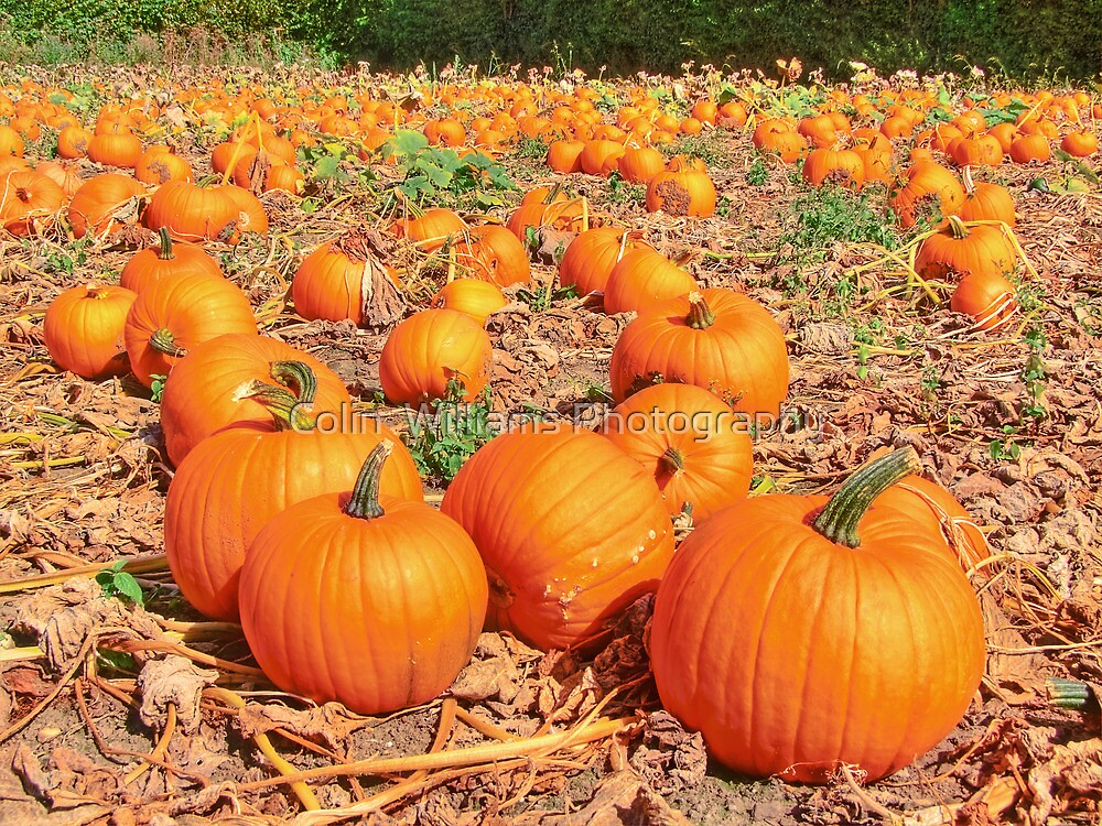 Pumpkin Plot ! by Colin  Williams Photography
