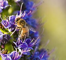 Bee - utiful! by Amy Dee