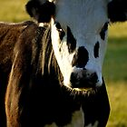 cOw, small c big O by evvy84