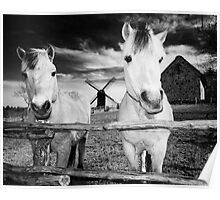 Horses at Hjede Hede Poster