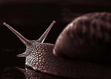 snail monochrome by stelio