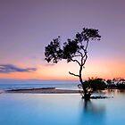 Garry's Tree - Wellington Point Qld Australia by Beth  Wode