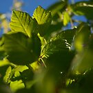 leafe me up, Scotty ;) by byzantinehalo