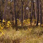 A Walk on Black Mountain - Canberra by chijude