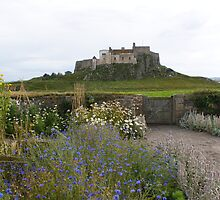Lindisfarne Castle view from Gertrude Jekyll garden by BronReid