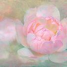 awakening by Teresa Pople