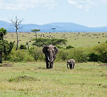 Elephants on the Masai Mara by Sue Robinson