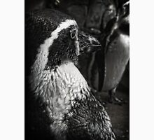 Humboldt Penguin, Black and White T-Shirt