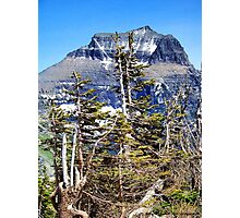 Windblown (Glacier National Park) Photographic Print