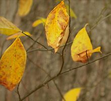 Last Golden Leaves by Laurie Minor