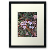 Fall 2012 Collection 6 Framed Print